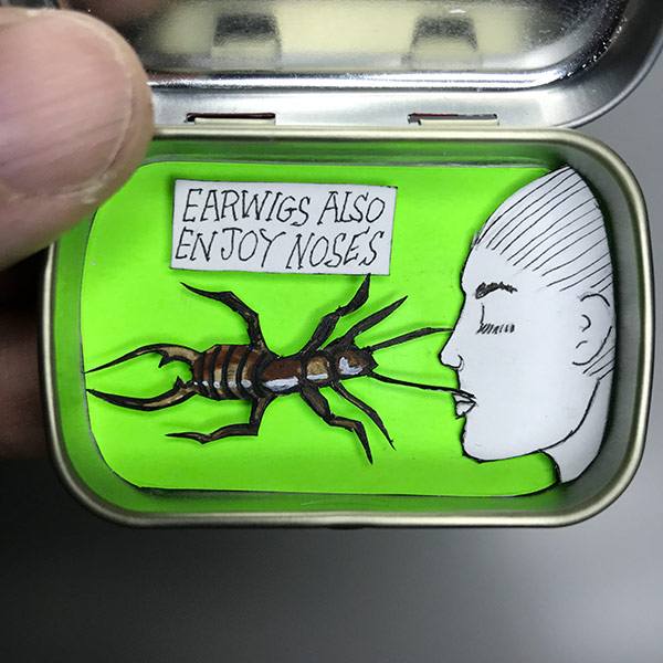Paper cutout earwig, and a pretty nose in an Altoid smalls tin