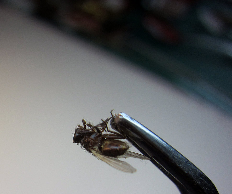 fly-3