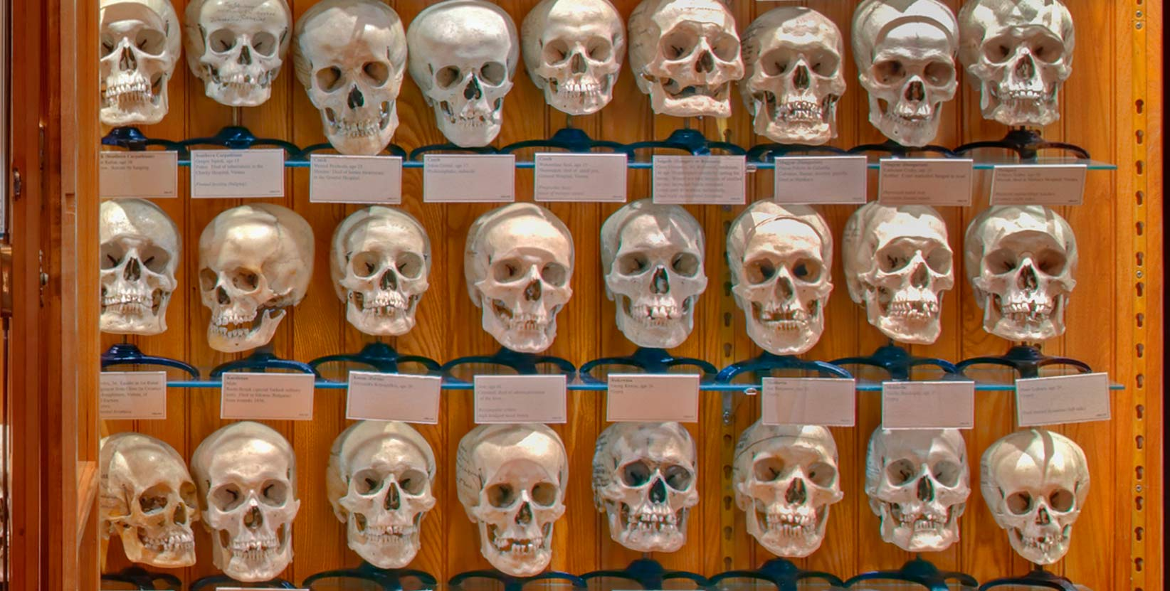 Death Salon – Mütter Museum