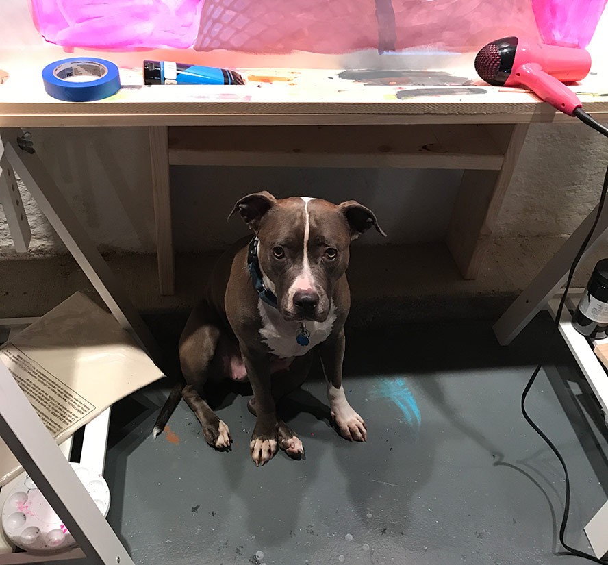 Pit bull sitting by my table