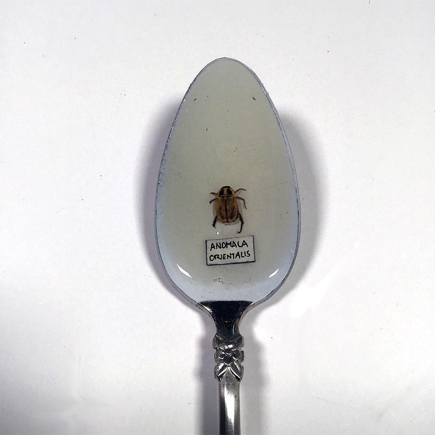 Anomala Orientalis in resin, resting in a spoon