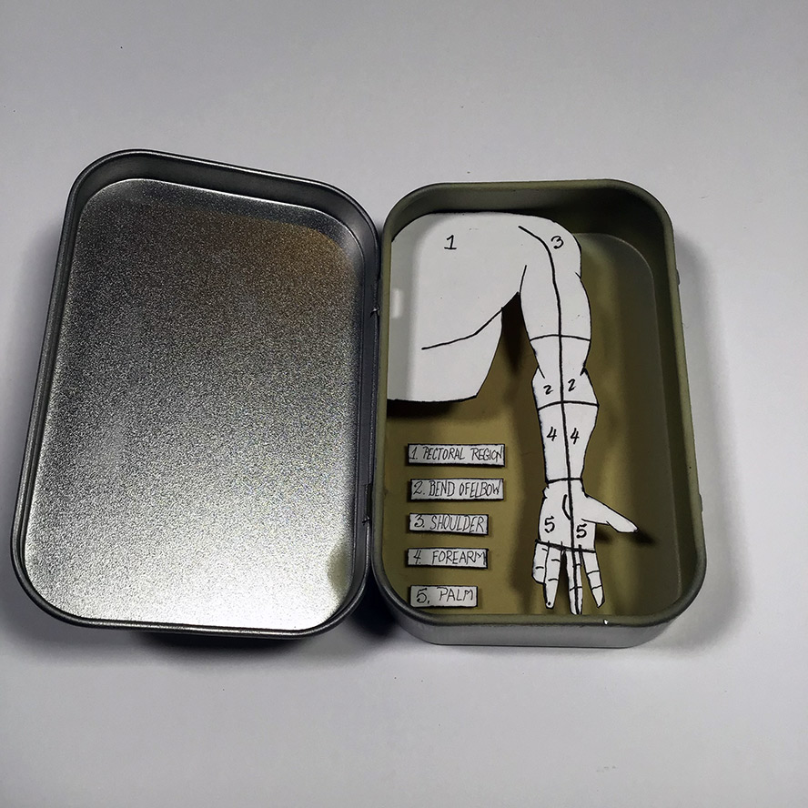Anatomic drawing of an arm in an altoids tin