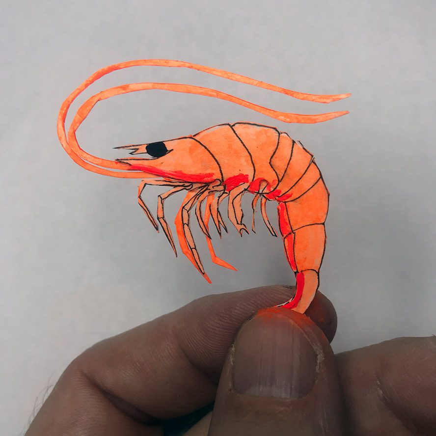 cut paper shrimp