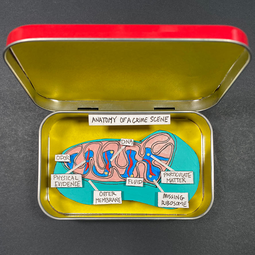 Cut paper diorama in altoids box, showing a cutaway of a mitochondria